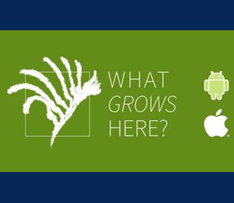 Image of the App logo What Grows Here